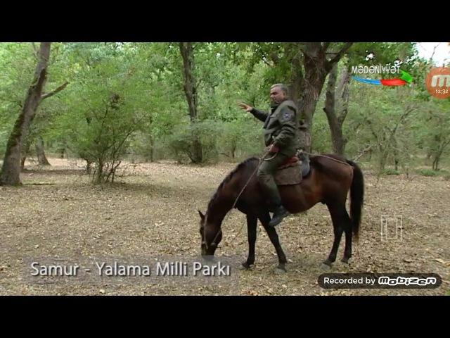 Azərbaycan təbiəti: Samur-Yalama Milli parkı Леса Азербайджана