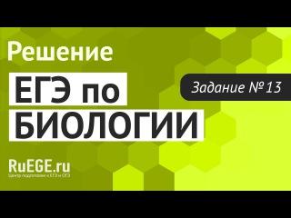 Решение демоверсии ЕГЭ по биологии 2016 | Задание 13. [Подготовка к ЕГЭ (RuEGE.ru)]