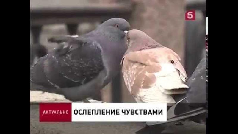 Мирославлев Вадим в программе Актуально на 5 канале