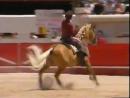 КОРРИДА на Мерлин. Мерлин (Merlin) — единственная лошадь, точнее кобыла, в мире, воспринимающая корриду как игру с быком. Устано