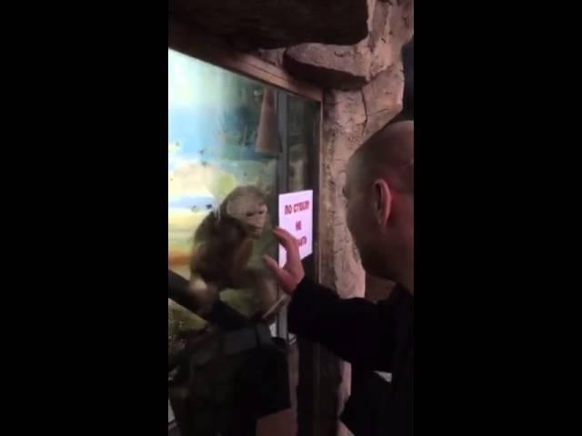 Обезьяна в зоопарке 18