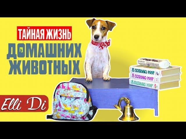 BACK TO SCHOOL - СОБАКА ИДЕТ В ШКОЛУ | СКЕТЧ ЭЛЛИ ДИ И ДЖИНА | Elli Di Собаки