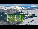 Весенние Карпаты: Поход в поисках весны (Полная версия фильма) / Пеший поход в горы, походное видео