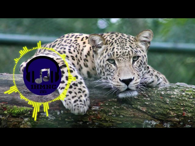 Jani - Do To Me (feat. Carly Lind) 【Future House 】 1 Hour Extended Version