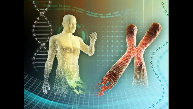 Научфильм Хромосомная теория наследственности