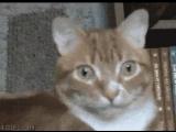 Реферальная программа Мини-Игры Mail.Ru в котах