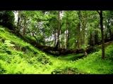 Batumi Botanical garden Lile Meskhidze