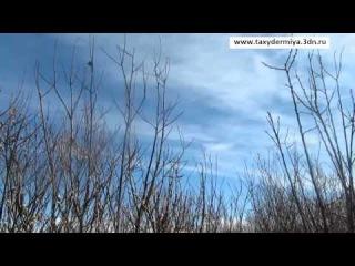 Охота на гуся,утку,вальдшнепа,глухаря весна 2012.mp4