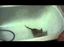 Котик после купания