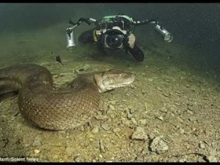 Diver braves the waters to swim with deadly 26-foot anaconda