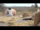 Трейлер Фильма Жыве Беларусь альбо идите все в жопу