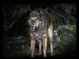 Skillet - Savior (Far Cry 4 )