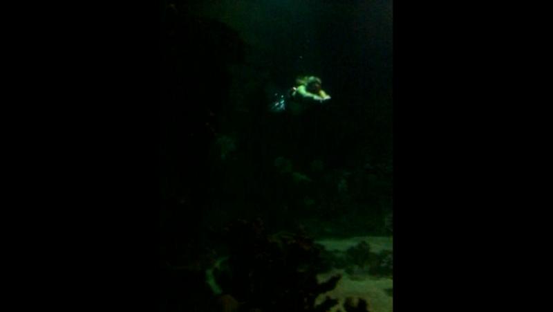 Шоу русалок в океанариуме город Сочи