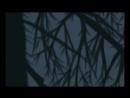 Video by ValkoinenPainajainen - Talven Puu