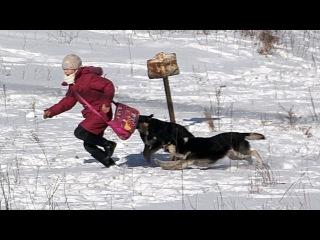 Липецк видео ответ 6 защитникам бездомным собакам /Репост поста если за отстре ...