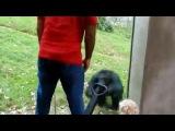 In da zoo