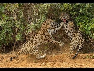 Дикая удивительная природа Бразилии.Документальный фильм.Фильм о животных.