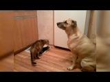 Пёс делится едой с кошкой