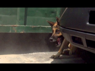 Security guards rush to help Hope For Paws rescue a homeless German Shepherd.