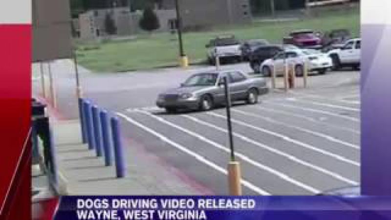 Автомобиль с собаками за рулём врезался в здание супермаркета в США