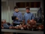 Ссора Маккоя и Спока о трибблах (Стар трек/ TOS Star Trek/ Звёздный путь) 2х15
