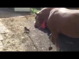 мы идём с конём по полю вдвоём