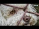 На фестивале в Китае съедят несколько тысяч собак