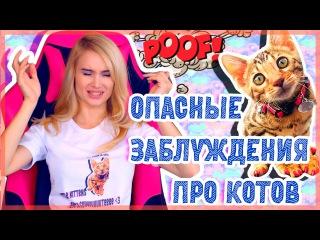 ОПАСНЫЕ ЗАБЛУЖДЕНИЯ О КОШКАХ 2!| AVEME LISSA