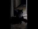 Как чихает кошка...