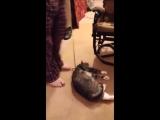 Кот притворился мертвым, чтобы не идти на прогулку