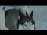 Белый плен ( 2006 ) ...