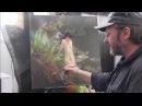 Ню. Видео уроки живописи для новичков