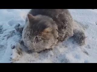 Спасение кота вмерзшего в лед при -35 градусов