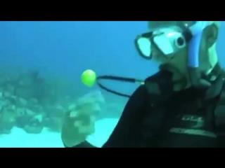 Что будет если разбить куриное яйцо под водой