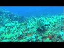Vandenyno pasaulis (OceanWorld BRRip Xvid AC3 Ltu by DJ Impuls TRL Team)