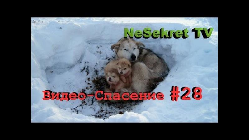 Спасение 28. Спасаем собак от голодной смерти. Город Улан-Удэ.