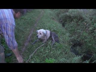 Спасение выброшеной собачки (ПОЛНАЯ ВЕРСИЯ) вкдобро собака