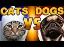 Ultimate Thug Life Compilation 41 Cats vs Dogs