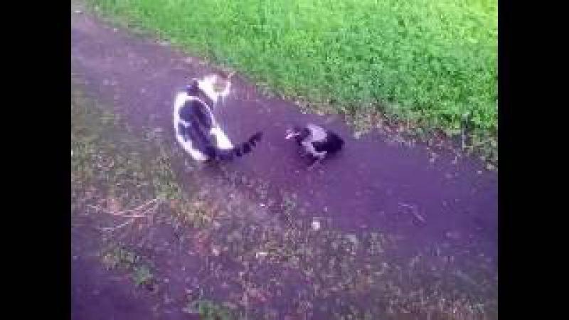 ворона и кот ну поговори со мной