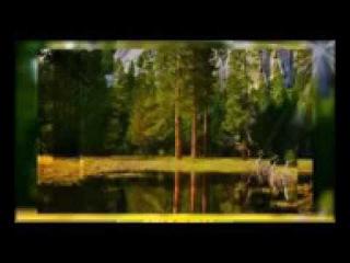 3 Владимир Мегре Книга 3Пространство любви Звенящие кедры России
