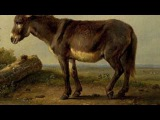 Saint-Saens Carnival of the Animals~Hemiones (animaux veloces) Wild Asses