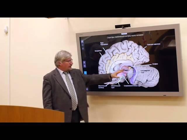 Рептильный мозг или R-комплекс, порождающий примитивные желания очисти себя от похоти (эротика порно секс)