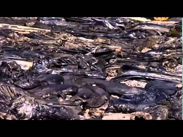 BBC Лагерь смерти Треблинка Рассказ выживших 2012