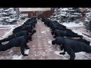 Управління патрульної поліції у м Хмельницькому звітує про прийняття та виконання естафети