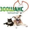 """""""ЗООШАНС""""-помощь бездомным животным в Чернигове!"""