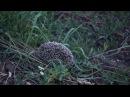 Ёжик романтик с ромашкой на колючках в поле возле карьера
