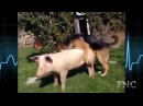 СЕКС Животных С Другими Разновидностями Животных! Animal Mating With Different Animals!