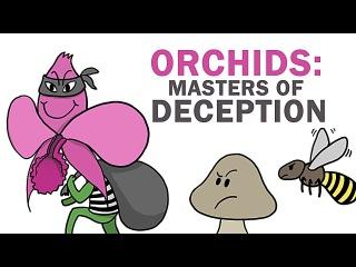 Орхидеи – первоклассные лжецы, притворщики и воры   Озвучка DeeAFilm