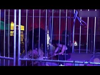 В китайском цирке  связали амурского тигра, чтобы посетители садились и делали фото (VHS Video)