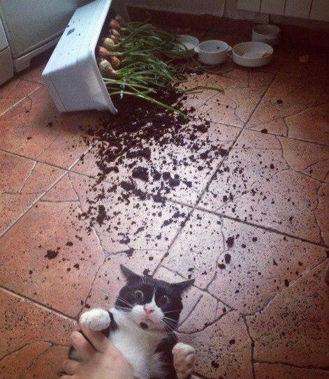 коты и цветы - Страница 2 XBTJVnA8Reo